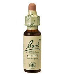 Bach Gorse, 20 ml POWER HEALTH